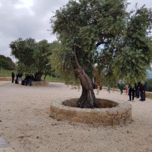 Monastery of Chrysolakournas Court Yard