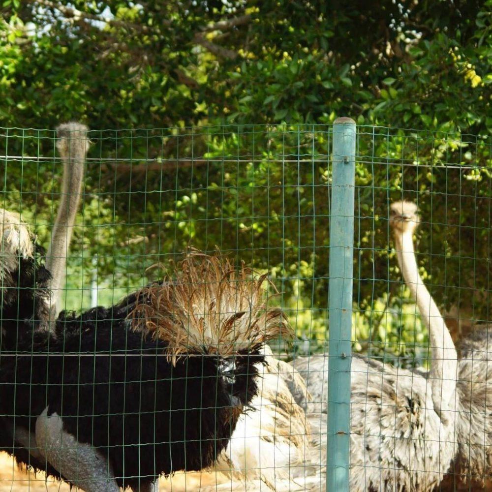Places to Visit - Paphos Zoo